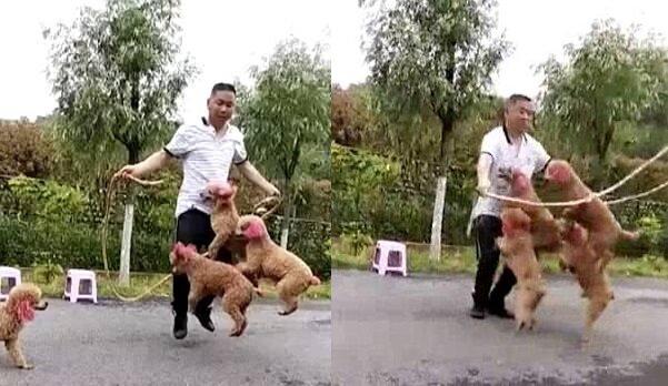 Die vier Hunde. Quelle:dailymail.co.uk