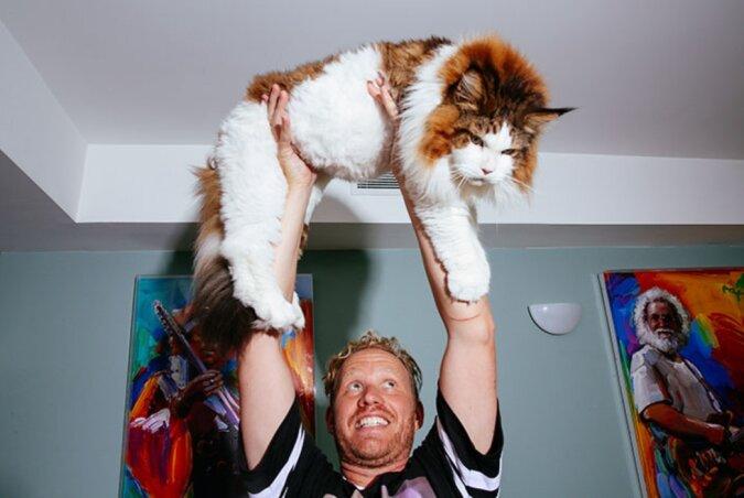 Größte Katze in New York: Samson wiegt 13 Kilogramm und ist über einen Meter lang