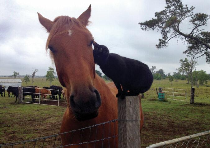 """""""Fast unzertrennlich"""": Der Fotograf erzählte über die Freundschaft zwischen einer Katze und einem Pferd, die sieben Jahre lang dauert"""
