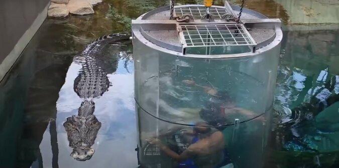 Krokodil. Quelle: Screenshot YouTube