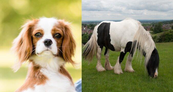 Spaniels und Pferd. Quelle:dailymail.co.uk