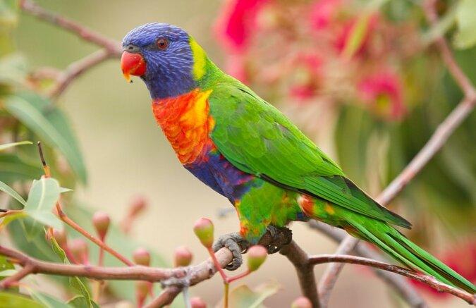 """""""Regenbogenmutanten"""": Wie Papageien mit einer seltenen Farbe aussehen"""