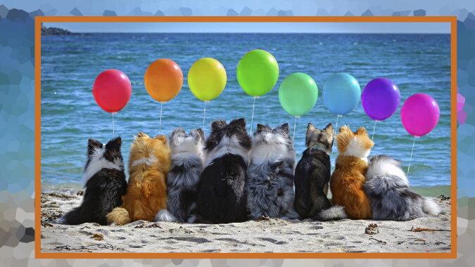 Hunde mit Luftballons. Quelle: zoom.com