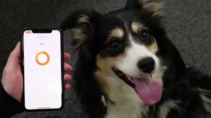 Das Gerät, das hilft, Hunde zu verstehen. Quelle: Screenshot YouTube