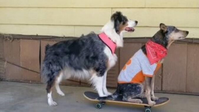 Die Hundefreunde. Quelle:dailymail.co.uk