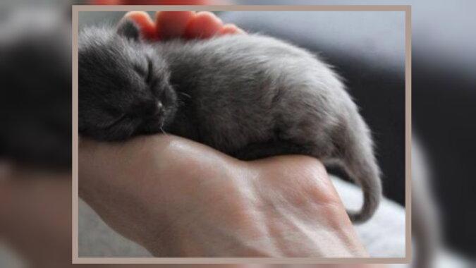 Ein Kätzchen. Quelle: dailyadvent.com