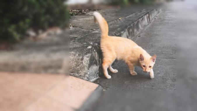 Das rote Kätzchen. Quelle: pinterest
