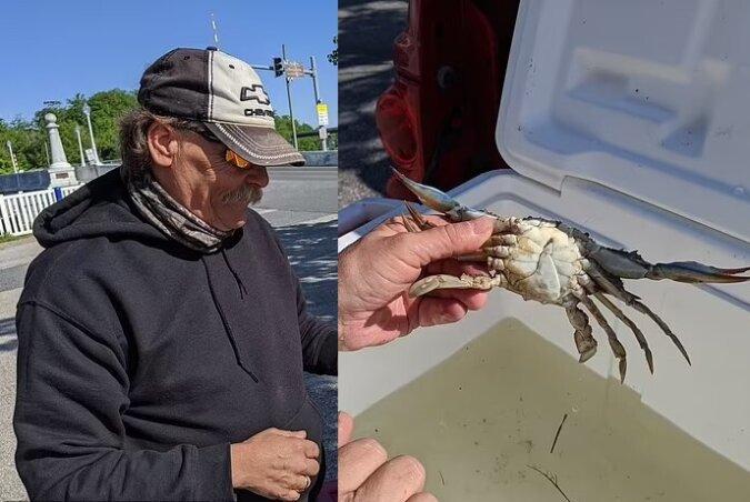 Eine bilaterale gynandromorphe Krabbe. Quelle:dailymail.co.uk