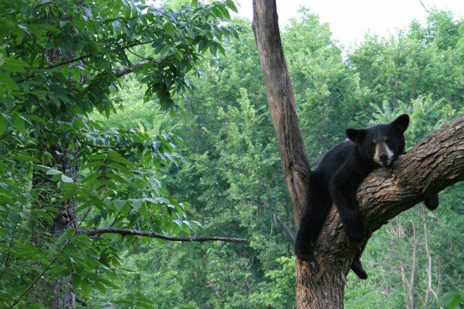 """""""Unerwarteter Gast"""": Ein einsamer Bär beschloss, das Erntedankfest inmitten von Menschen zu verbringen, und erschrak Einheimischen"""