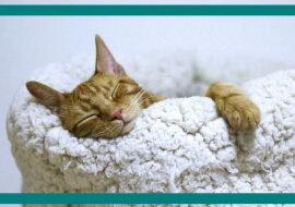 Eine Katze schläft. Quelle: travelask