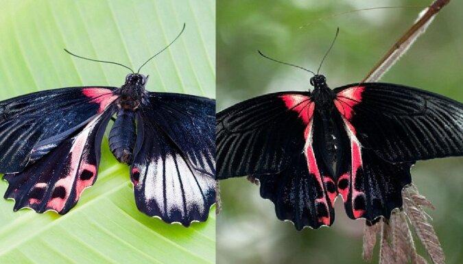 Schmetterling. Quelle:dailymail.co.uk