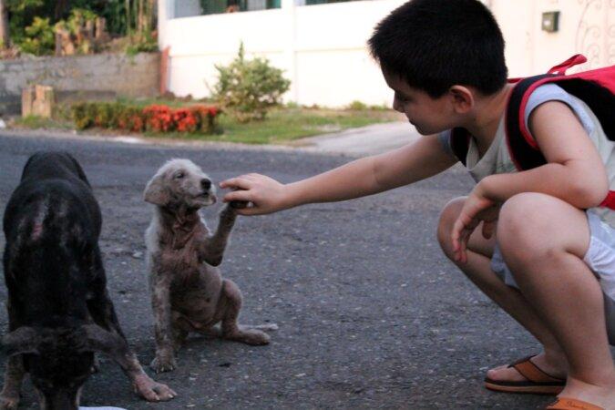 Der Junge gab sein Taschengeld für Futter für streunende Hunde aus, als er neun Jahre alt war, eröffnete er ein Tierheim