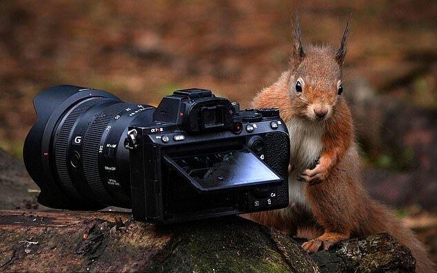 """""""Zum Fotografie wie geschaffen"""": Ein Mann ließ seine Kamera unbeaufsichtigt und sie wurde sofort von einem neugierigen Eichhörnchen aufgenommen"""