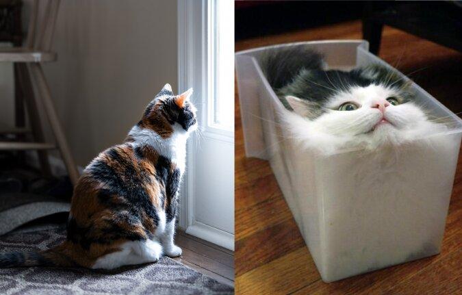 """Eine """"flüssige Katze"""". Quelle:dailymail.co.uk"""