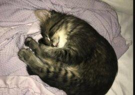 Eine kleine Katze. Quelle: zen.yandex