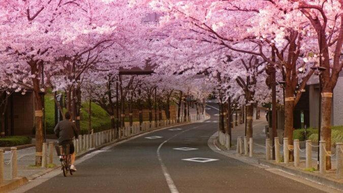 Die Kirschblütenzeit. Quelle: travelask