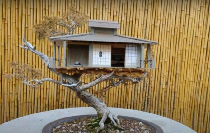 Bonsai-Haus. Quelle: Screenshot YouTube