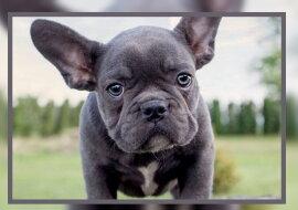 Ein Hund. Quelle: dogmasya