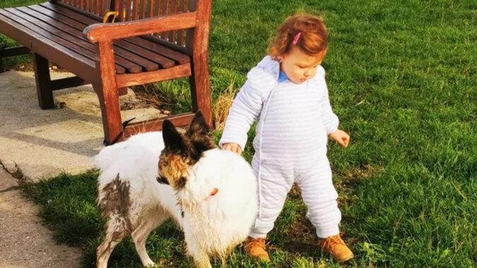 Die Hündin Bonnie und das Kind. Quelle: goodhouse