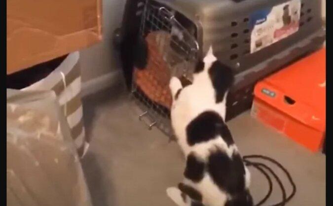 Die Katze rettet ihre Freunde. Quelle: Screenshot YouTube