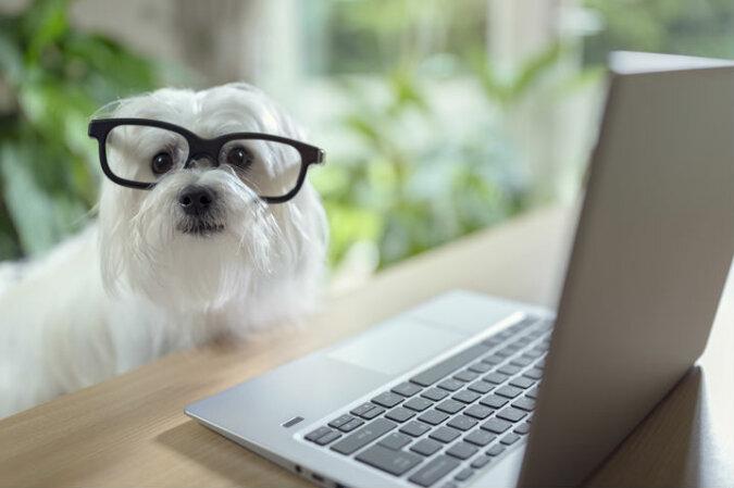 Wissenschaftler versuchen, den klügsten Hund der Welt zu finden: Max und Squall stehen mit einander im Leistungsvergleich