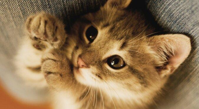 Ein schönes Kätzchen. Quelle: science