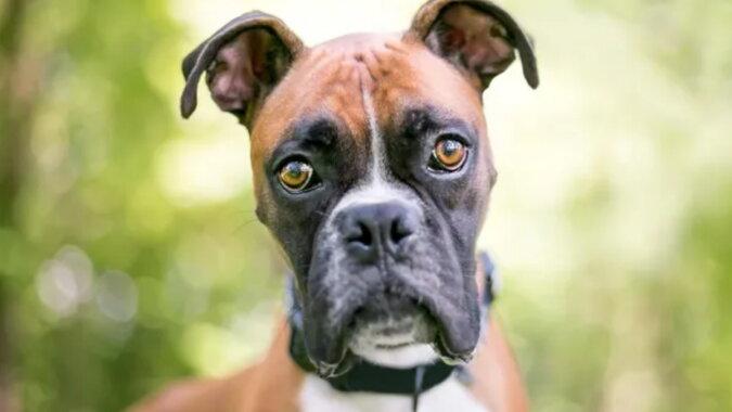 Ein Hund. Quelle: goodhouse