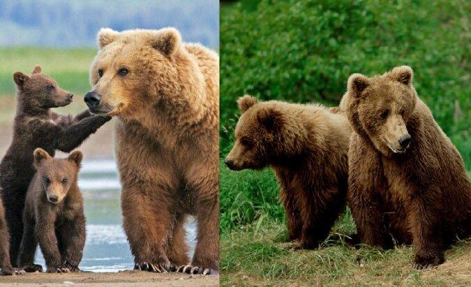 Eine Bärenfamilie. Quelle:dailymail.co.uk