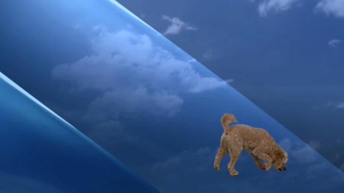 Der Hund während einer Live-Übertragungen. Quelle: Screenshot YouTube