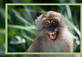 Ein Affen. Quelle: pikabu