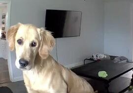 Ein Hund. Quelle: dailymail.com