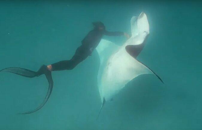 """Ein drei Meter langer """"Seeteufel"""" schwamm zu den Menschen, um Hilfe zu bekommen"""