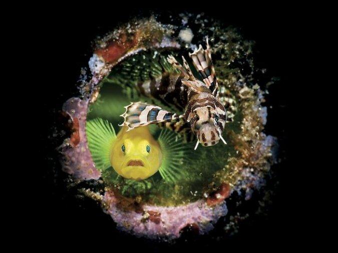 Tiefen des Meeres: Gewinner des Unterwasserfotografiewettbewerbs 2020 bekannt gegeben