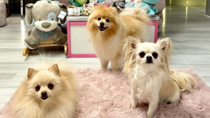 Drei Hunde. Quelle: instagram
