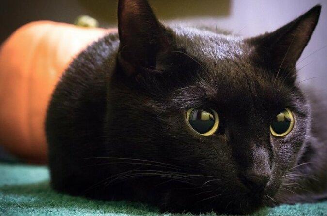 Kein passender Ort für abergläubische Menschen: das einzige Café der Welt, wo nur schwarze Katzen wohnen