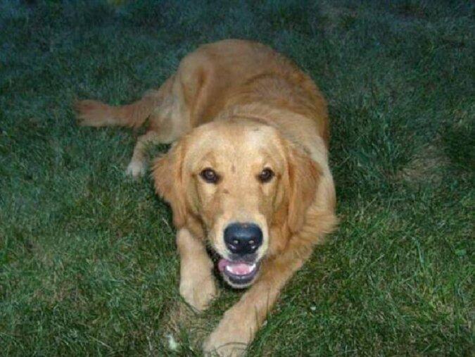 Der Hund kam zu einer Frau und schlief bei ihr zu Hause. Dank einer Notiz an seinem Halsband waren die Gründe dafür bekannt