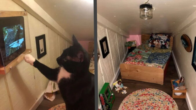 Die Katze und ihr Zimmer. Quelle: goodhouse