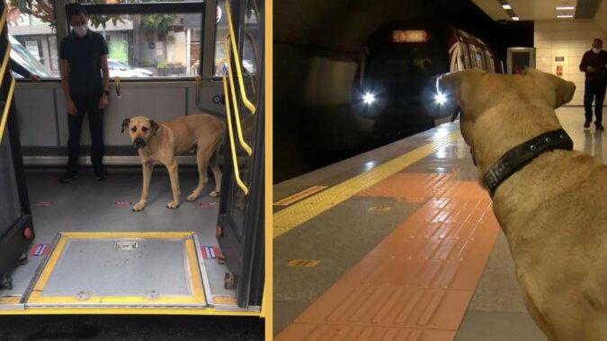Der reisende Hund Boji. Quelle: instagram