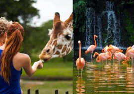 Zoo. Quelle:dailymail.co.uk