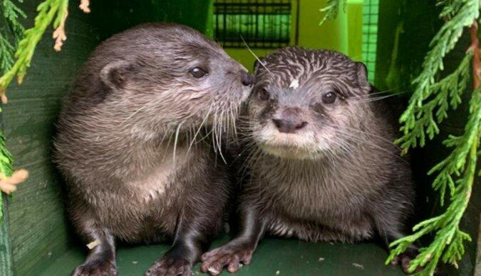Süße Otter. Quelle: apostrophe.com