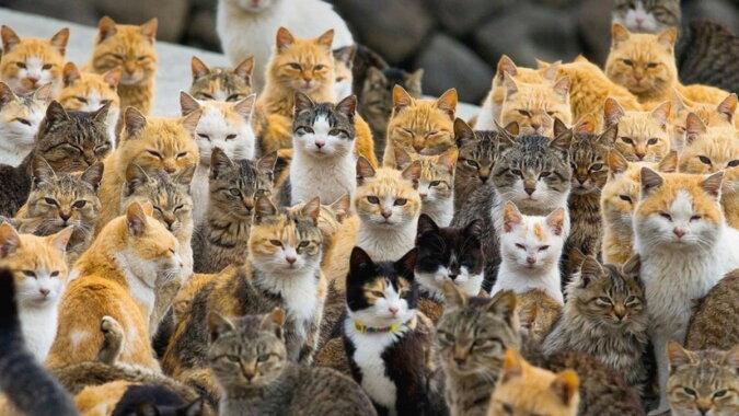 Katzen. Quelle: travelask
