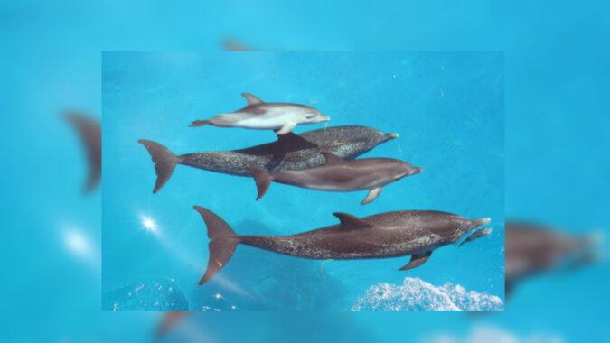 Delfinfamilie. Eine Quelle: moremore