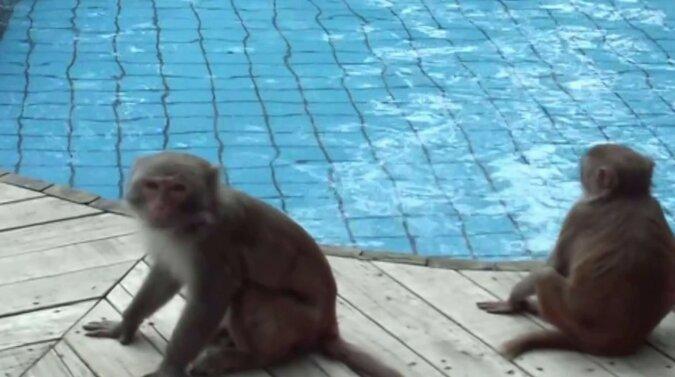 Makaken neben dem Bad. Quelle: ytimg