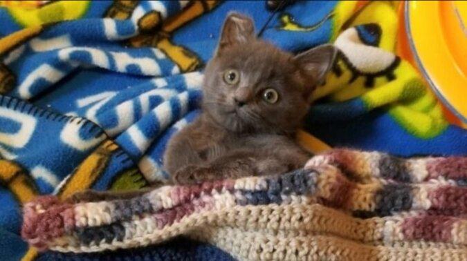 Ein Kätzchen, das seine Pfoten nicht mehr spüren kann, kann trotz aller Schwierigkeiten wieder laufen