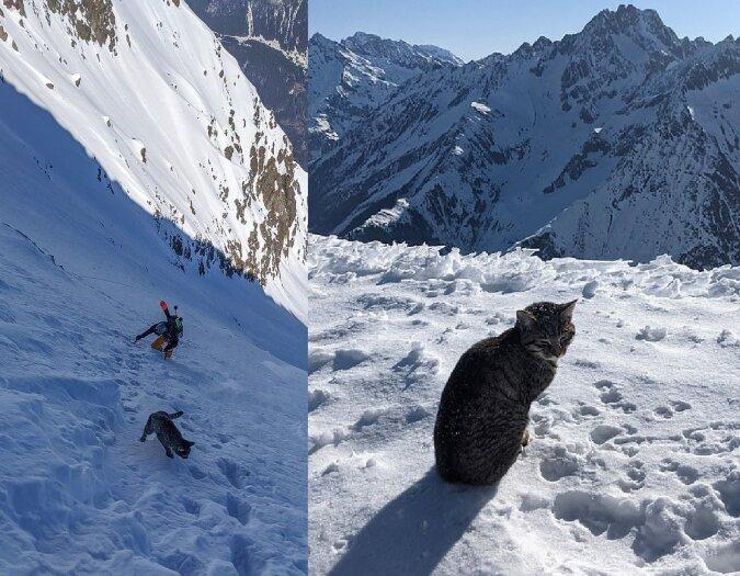 Katze in den Bergen. Quelle:dailymail.co.uk