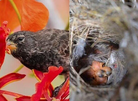 Vögel. Quelle:dailymail.co.uk