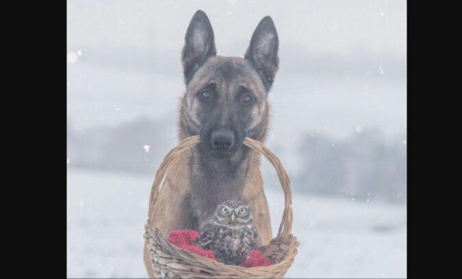 Die deutsche Fotografin hat eine Fotoserie über die innige Freundschaft zwischen ihrem Schäferhund und einer winzigen Eule geschaffen