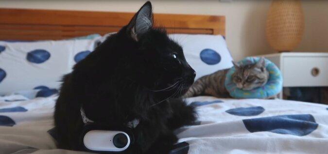 Katzen. Quelle: Screenshot YouTube