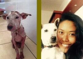 Der Hund mit der neuen Besitzerin. Quelle: goodhouse