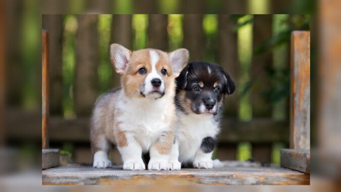Niedliche Hunde. Quelle: goodfon